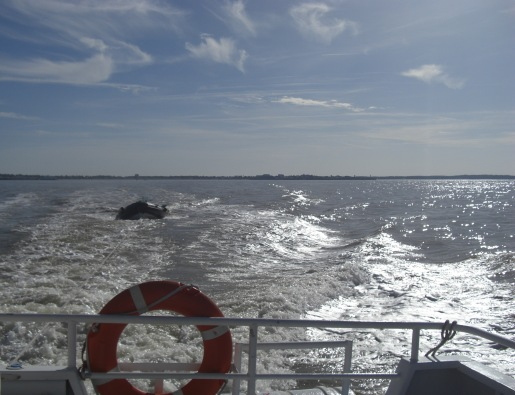 Boat trip to Phare de Cordouan, Royan