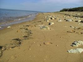 Ile d'Oleron Beach